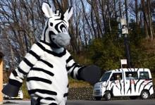 zebra-drill-japan